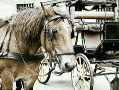 Amsterdam horses