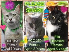 These cats desperately need a rescue or adoption ASAP. If you are a rescue or know a rescue that can help, please contact Hawkesbury Pound, NSW on (02) 4560 4644 (if no answer, leave a message) or email companionanimal@hawkesbury.nsw.gov.au