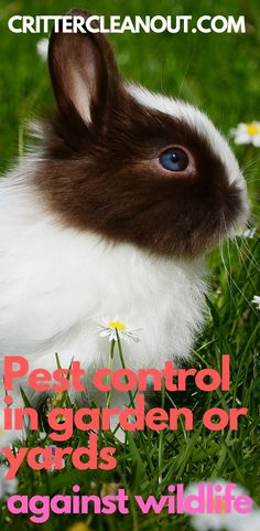 Pest control in gardens or yards against wildlife - Critter clean out Garden Snakes, Garden Insects, Garden Pests, Tips And Tricks, Motion Activated Sprinkler, Diy Garden, Garden Tips, Garden Ideas, Deer Repellant