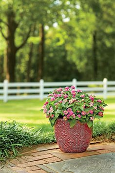 Lantana - 10 Flowers That Thrive in Full Sun - Southernliving. A beautifully potted Lantana will give color all summer and fall. The heat-tolerant plant loves full sun, and you only need a few plants to put on a show. Floridians–beware. Lantana seedlings can be invasive, so plant selections that set little or no seed such as 'Gold Mound' and 'Pinkie.'