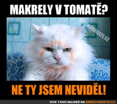 Makrely v tomatě? Funny People, Funny Jokes, Humor, Lol, Entertaining, Retro, Cats, Animals, Quote