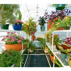 Dreaming of a greenhouse.....