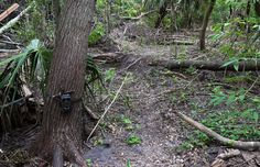 wildlife camera and mound to ride over. 09/24/2016