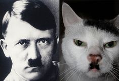 Adolf Hitler was not known as an idol or an icon, but he was known for his extremely cynical reputation as one if the most cruel and immoral leaders the World has every known. In addition, Hitler was known to possess a fear of cats. The fear of cats is known as ailurophobia.