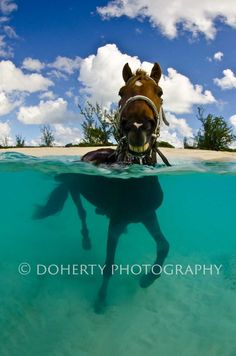 Horse swimming in the clear tropical waters. View of horse under the water and above. Such unique horse photography! I want to jump in that water with the horse!