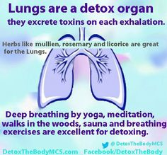 What Is the Importance of the Respiratory System?