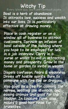 Witchy Tips - Basil - Pinned by The Mystic's Emporium on Etsy Youtube Tips, Every Witch Way, Eclectic Witch, Kitchen Witchery, Wicca Witchcraft, Green Witchcraft, Magick Spells, Candle Spells, Herbal Magic