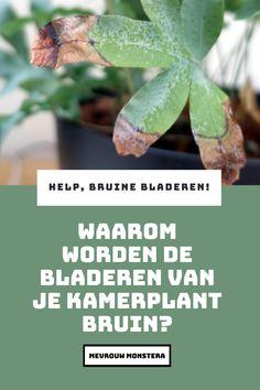 Krijgt jou kamerplant bruine randjes of vlekjes op de bladeren? Lees in deze blog wat de oorzaak kan zijn en hoe je het gemakkelijk oplost!