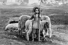 Um pastor pequeno da foto por AMRITPAL Luthra - National Geographic Seu Tiro