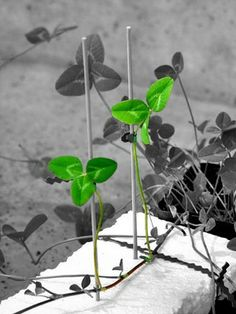 Clever plants chat over their own network