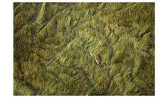 Okavango grasses from the air...