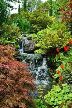Waterall with Acer, Lobelia, Love temple glimpse