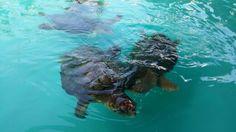 Floripa - tartaruga marinha