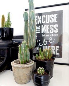 | CACTUS Ik trap de maand september af met een gastblog die ik weer mocht schrijven voor @jellinadetmar! Wil je meer lezen over hoe je het beste je cactussen kunt verzorgen? Ga dan gauw naar de website www.jellinadetmar.nl! Ik heb wel 8 cactussen in huis staan! En jullie?