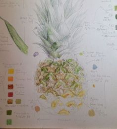 A blog about botanical art, including drawing and watercolour painting tuition on paper and vellum