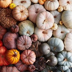 """660340f0a2a Martha Stewart on Instagram  """"Spending the first day of October liiiike..  🍁😍🎃 Share your  pumpkin photos with us today"""