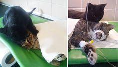 Amazing Cat Nurses Sick Animals at Polish Animal Shelter