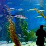The Melbourne Aquarium is one amazing and must-see attraction of Australia that attracts plenty of tourists.