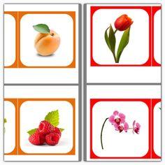 Images classifiées : Fruits, légumes, fleurs - Montessori EtCie
