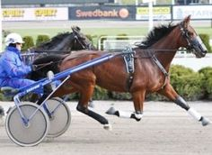 Sundons Gift - the first Australian Harness horse to compete in the famous Elitlopp race in Sweden. Trained by Chris Lang, he contested the 2009 race.