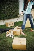 General Moving Tips  Some Helpful Moving Tips When Moving With Pets