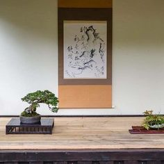 Rhododendron lysolepsis and accent planting. Scroll with prawns suggesting the seasonal approach.  #盆景 #盆栽 #분재 #bonsai #shohin #shohinbonsai #japanese #art #tree #nature #life #feel #albek #mortenalbek  #tokonoma #toko #床 #床の間 #shohineurope www.shohin-europe.com www.shohinblog.com
