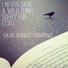 David Herbert Lawrence