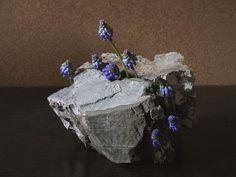ムスカリ//私のベランダに咲いたムスカリを見ながら友人が言った。 「埋葬の習慣を持っていたネアンデルタール人の墳墓の発掘調査で、 遺骨の周辺の土からムスカリの仲間の花粉が検出されたんだって。 そこから、彼らは死者に花を手向けていたと考えられているんだよ」 胸を衝かれるような太古の惜別の風景。