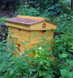 Backyard Beekeeping!  The increase in mono-cultures on farms are depleting the bee population.  Help keep our bees alive!