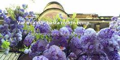 Dialetto Milanese Milano, Plants, Pictures, Photos, Photo Illustration, Plant, Resim, Planting, Planets