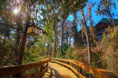 Disney's Wilderness Lodge & Villas   Pinned by Mouse Fan Travel   #disneyworld #disney #resort #hotel #travel #vacation