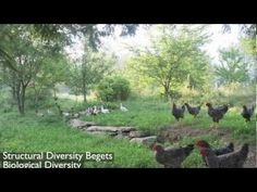 Ben Falk at NOFA VT 2013: Homestead and Farm Resiliency - Principles in Practice .......this is fantastic information on how thing interact! (A MUST WATCH FOR THE NEW BEGINNER  HOMESTEADER!)(listen to the benefits of the Black Locust tree!)