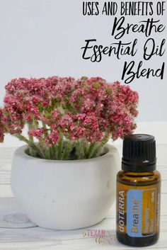 Breathe Essential Oil Uses and Benefits doTERRA