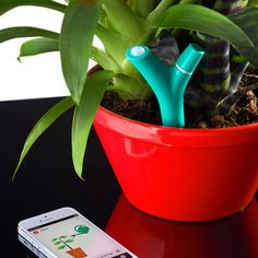FLOWER POWER - a little device you stick in your house or garden plant's soil. It comes with a free app that informs you of sunlight received, temperature and humidity of the soil, and if your plant needs watering.