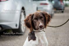 Webstore | JHP-Heidewachtels-Haaften | Totally Eye Photography