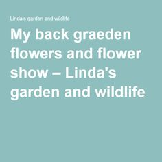 My back graeden flowers and flower show – Linda's garden and wildlife
