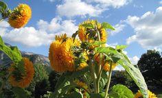 Le défi photographique # FLOWERPOWER2015 proposé par BERNIE nous permet de commencer notre semaine dans la bonne humeur, en fleurissant nos blogs !!!! Tous les lundis, poster un article avec une fleur (photo, dessin, illustration...), en incluant le logo...