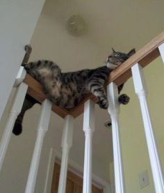 Funny Cats in Weird Positions | PawNation - PawNation