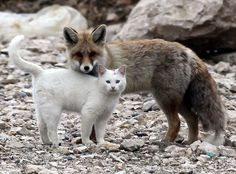 unlikely and heart heart-rendingly gorgeous animal buddies
