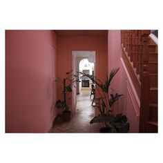 Pink Walls, East London, Green Plants, First Home, Interior Design, Palms, Instagram, Nest Design, Home Interior Design