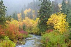 Check out our awesome Fall Vacation Packages in the Black Hills