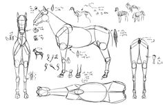 drawing-from-imagination-horse-referrence-sheet.png (600×395)