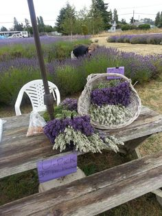 Ahh Lavender Pretty to look at and pretty to smell
