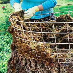 adding moss to tree stump planter