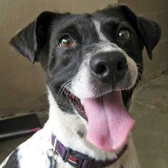 [Jessie ] needs a forever home. Helen Woodward Animal Center