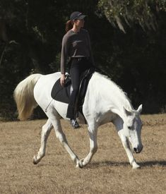 To bit or not to bit: Dressage Naturally Horse Stables, Horse Barns, Horse Tack, Dressage, Horse Behavior, Natural Horsemanship, Bareback Riding, Show Jumping Horses, Horse Training