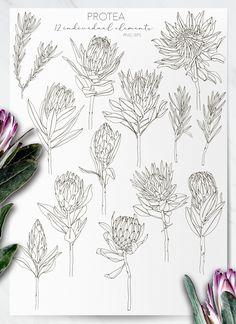 Protea Flower, My Flower, Flower Art, Botanical Tattoo, Botanical Flowers, Native Drawings, Australian Tattoo, Full Tattoo, Florist Logo