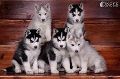 Cute puppy and dog - http://www.1pic4u.com/videos/hunde-babys/suesse-hundebabys-319/