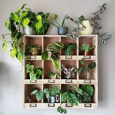Own green shelf // yo home plant shelves, green shelves, pl Green Shelves, Plant Shelves, Indoor Garden, Indoor Plants, Home And Garden, Indoor Herbs, Indoor Outdoor, Plante Pothos, Pothos Plant
