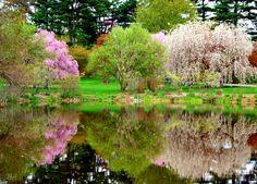 Pond in Arnold Arboretum - Boston